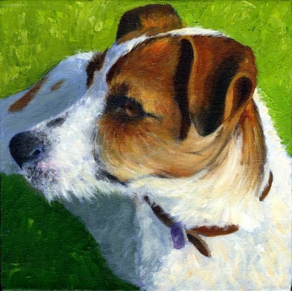 Jack Russell Named Chip