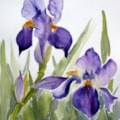AN IRIS! NOT A POPPY!!!!!!!!!!