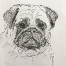 Quick sketch of pug