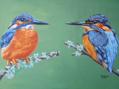 Kingfishers. 2016