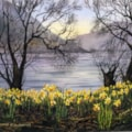Daffodils at Ullswater.
