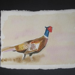 Pheasant on the run