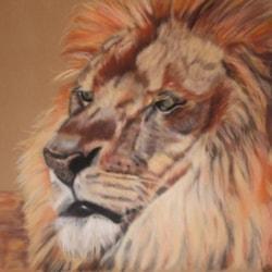 Lion recumbent