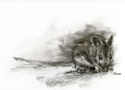I saw a mouse...
