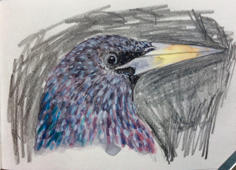 Starling portrait