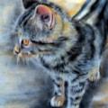 The Castelnou Cat