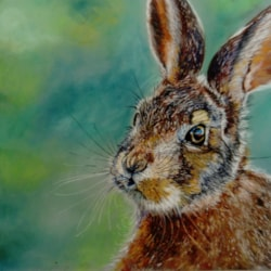 Leveret at dawn