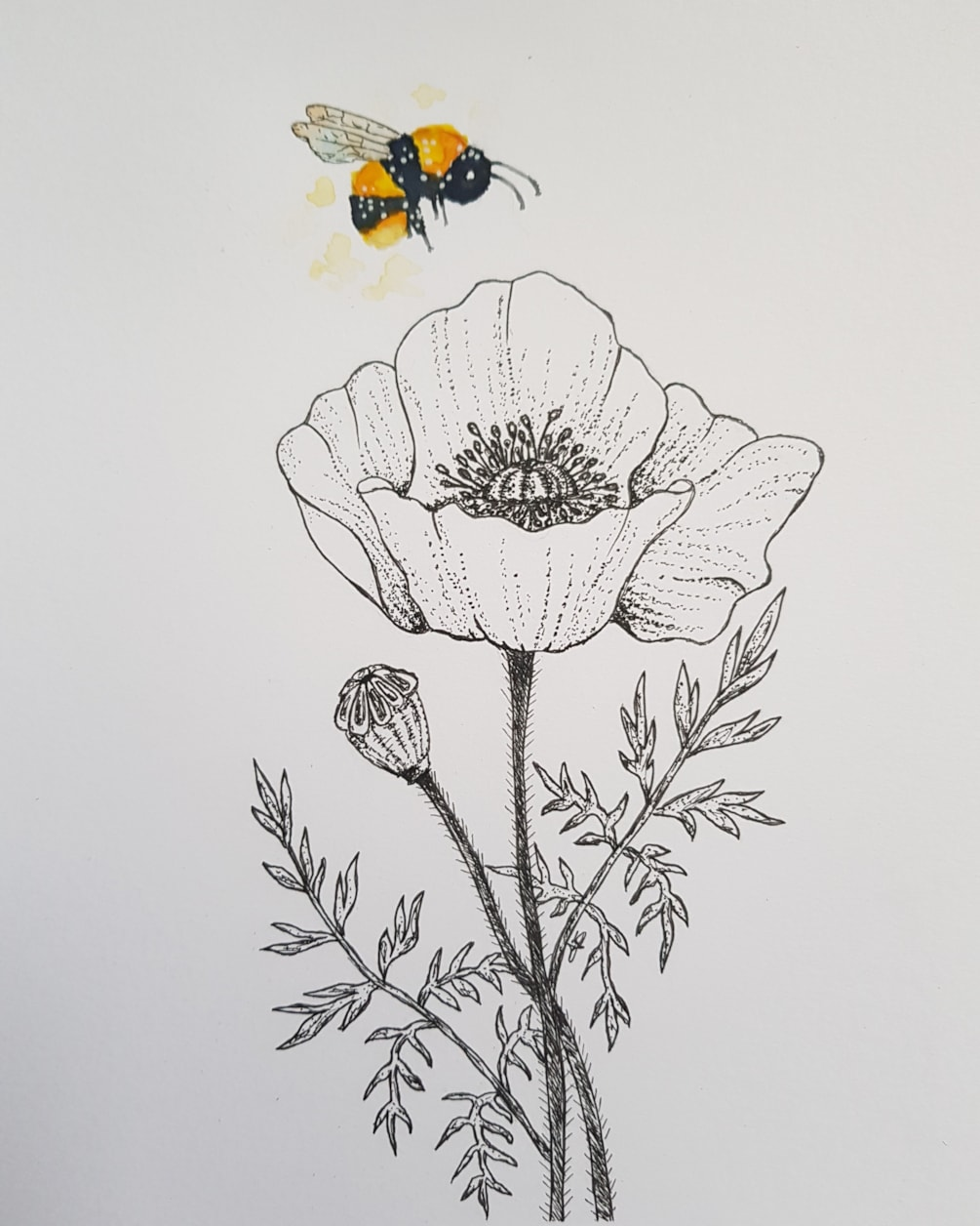 Poppy and the bee 2