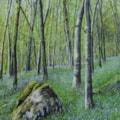 Bluebells Wye-Valley (1)