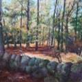 Shambellie Woods