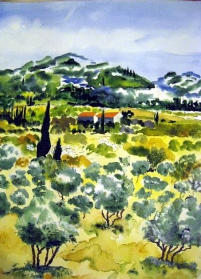 olive trees provence