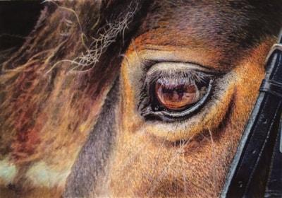 Essence of Equus