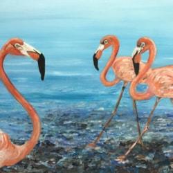 A few Flamingos