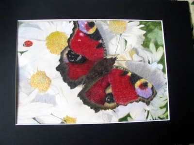 Red butterfly on white daisies