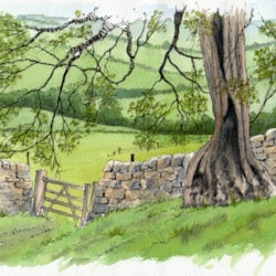 Yorkshire Dales Gate