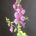 Foxglove, many in my garden, white to purple. Bees love them.
