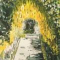 Laburnum Arch in Alnwick Park