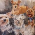 Buddy, Holly, Alfie and Poppy.
