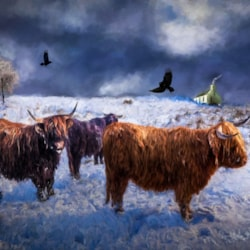 Highland Lassies