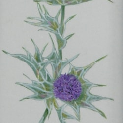Sea Holly - Open Acrylics on HP Watercolour Paper