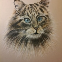 Tiger the Cat