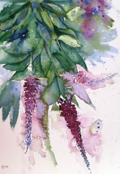 Buddleia from the garden