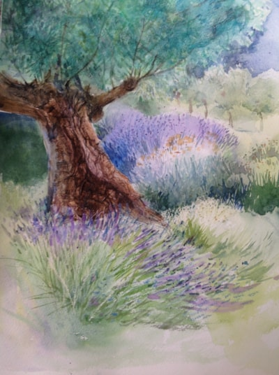 Old olive tree and lavender