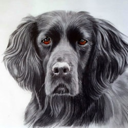 Black Dog 1