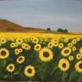 Sunflower Display