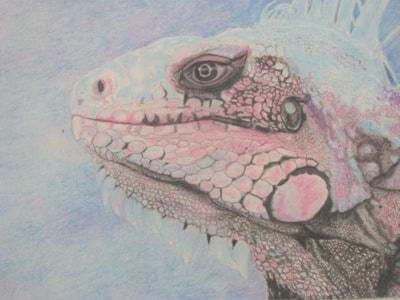 Igi the blue Iguana
