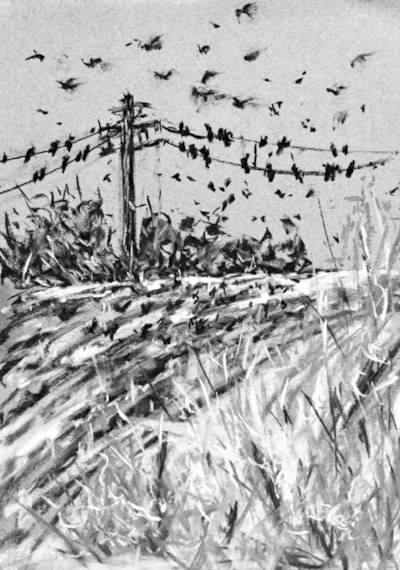 Rooks Gleaning 2