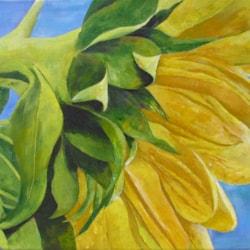 Sunflower summer 1