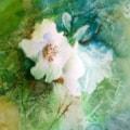 Shaded rose