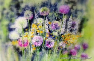 Alliums and Lupins