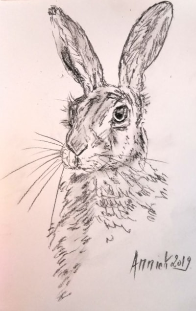 A quick hare sketch.