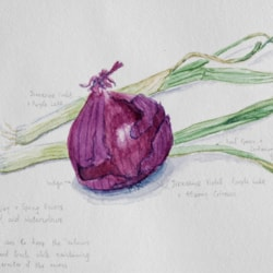 Red Onion and Spring Onions
