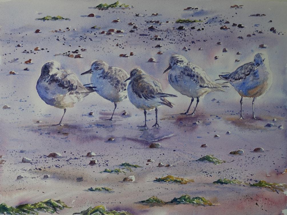 Sanderlings in the morning sun