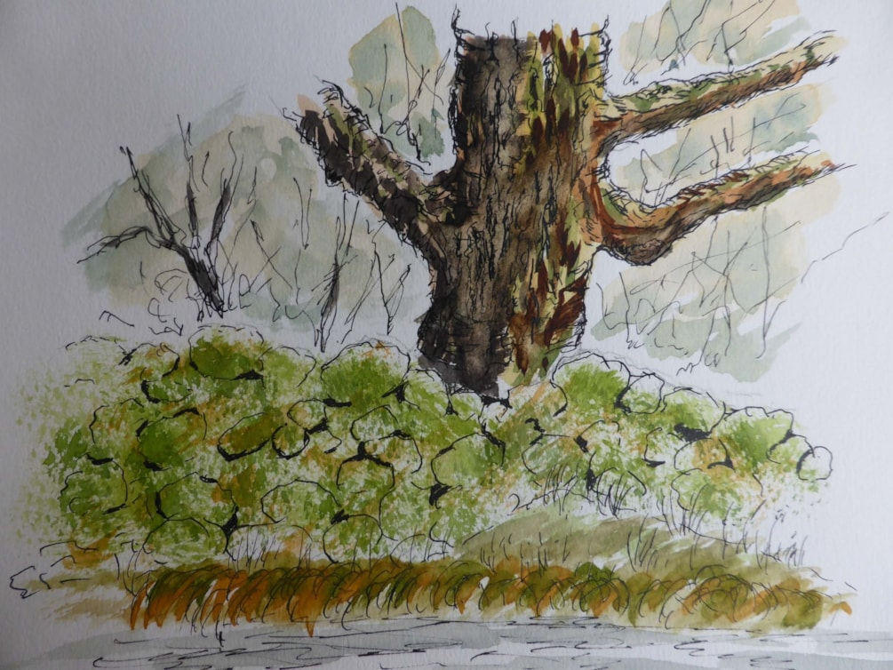 Mossy Wall try again, pen and wash sketch