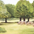 cattle grazing at Osterley