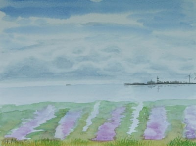 Salt Marches blooming
