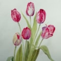 Stripy tulips