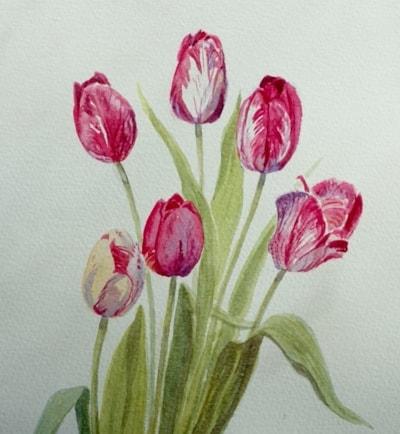 Stripy tulips