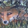 Fox Through Hedgerow