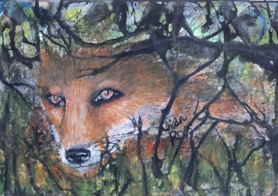 Fox Through Hedgerow