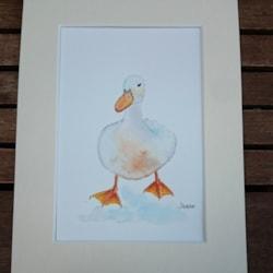 Rosie the duck