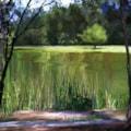 Woodland's Lake 1 (Series)