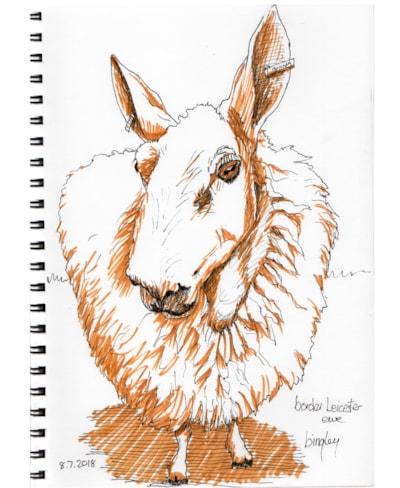 Border Leicester Sheep