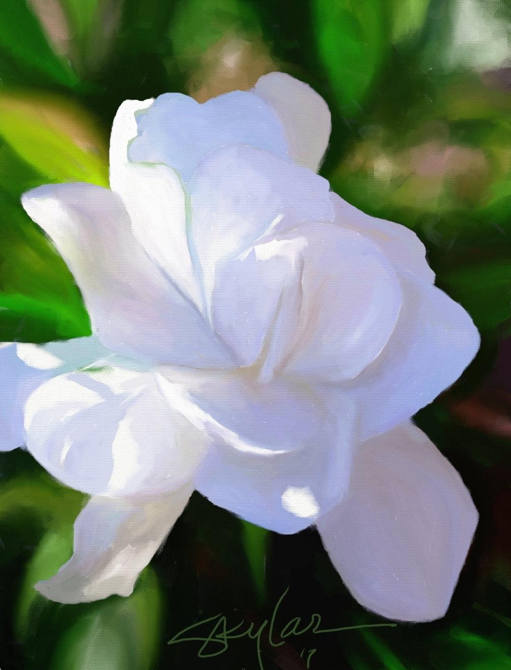 Dappled Magnolia