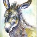Donkey Hoti