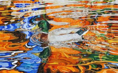 Duck in autmn coloured reflection
